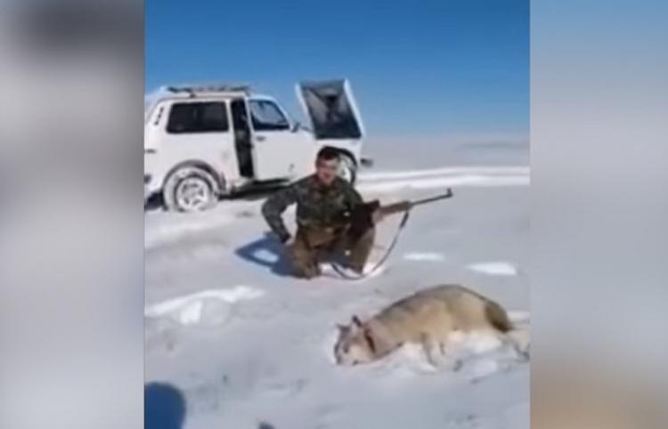 Un lobo vuelve a la vida para vengarse de su cazador