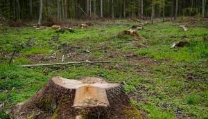 Clausuran actividades en predio de Nayarit por daño forestal