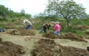 Avanza restauración de zonas áridas de Chihuahua