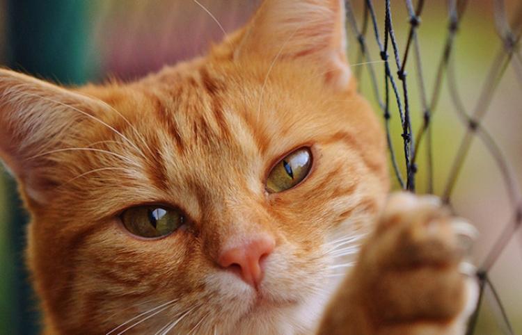Un gato arruina la entrevista en vivo a un académico y se hace viral