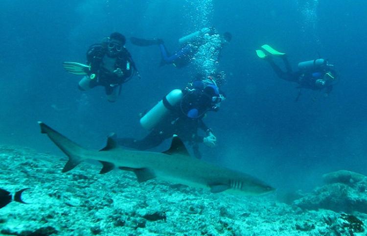 Un instructor de buceo impide que un tiburón muerda a su alumno