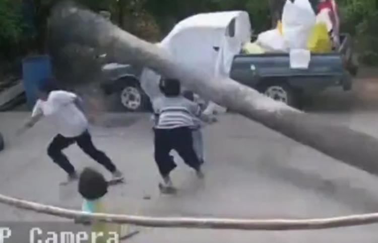 Un niño se salva por los pelos de que le aplaste una palmera de más de 9 metros