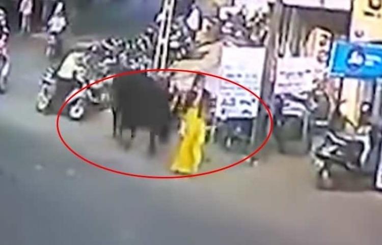 Un toro de 900 kilos lanza a una mujer varios metros por los aires