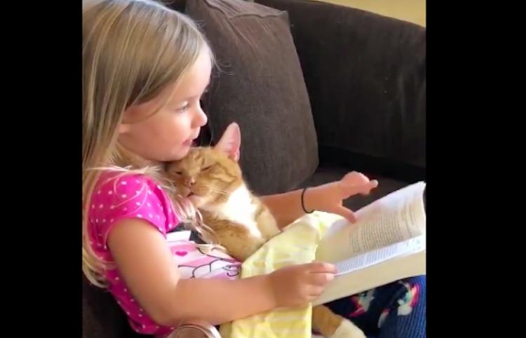 Para tu viernes; Tierna niña lee un cuento a su gatito para dormirlo