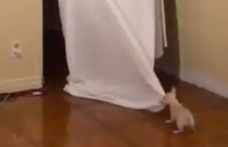 Intenta asustar a su perrito y pasa lo inesperado...