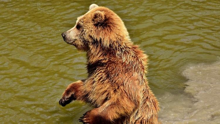 Pescadores filman los últimos minutos de vida de su amigo, perseguido por un oso