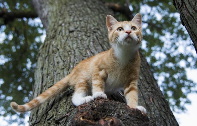 Los bomberos salvan a un 'héroe' atrapado en un árbol por rescatar un gato