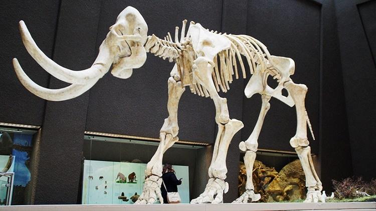 La vaca, ¿el mamífero más grande de nuestro planeta?