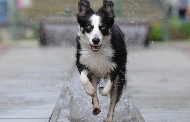 La felicidad de este perro que se zambulle en una fuente conquista a millones de usuarios