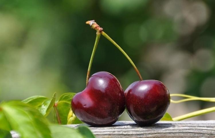¿Qué beneficios aportan las cerezas a tu salud?