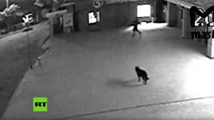 Un can forma parte de una banda de ladrones