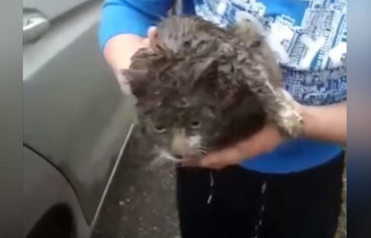 Una gata viajera recorre más de 100 kilómetros por Rusia debajo de un auto