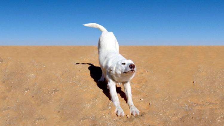 Decide tomar el sol en la playa, pero su perro arruina el momento