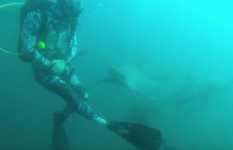 Escalofriante momento en que un tiburón ataca y hiere a un buceador