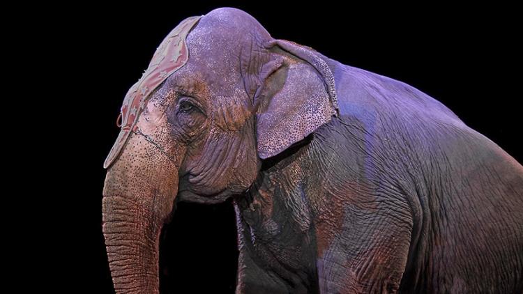 Un elefante cae sobre los espectadores de un circo y abre polémica en Alemania