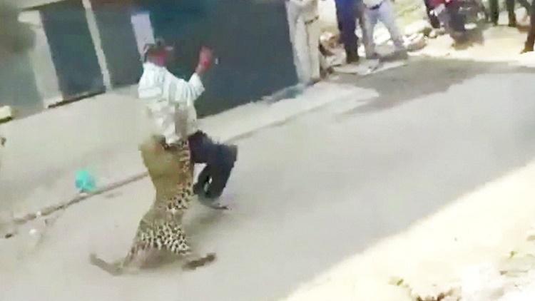 Un leopardo salvaje desata el pánico en las calles de una ciudad india