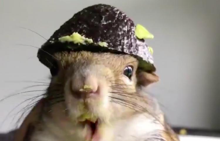 Tu día se mejorará viendo este tierno video de una ardilla comiendo aguacate