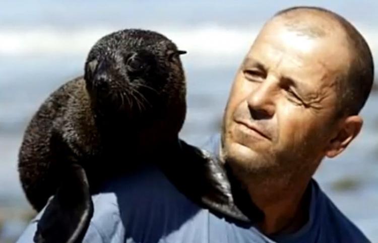 Encuentra dos cachorros huérfanos de lobo marino y lo adoptan como padre
