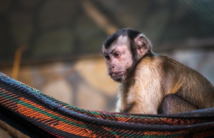Un mono se arroja al vacío desde una torre de alta tensión tras permanecer atascado tres días