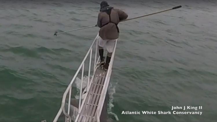 """Un científico observa tiburones blancos y uno le da una """"sorpresa"""" escalofriante"""