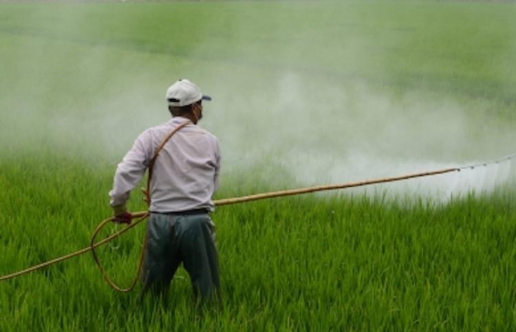 Comisión contra Riesgos Sanitarios combatirá comercio ilegal de plaguicidas