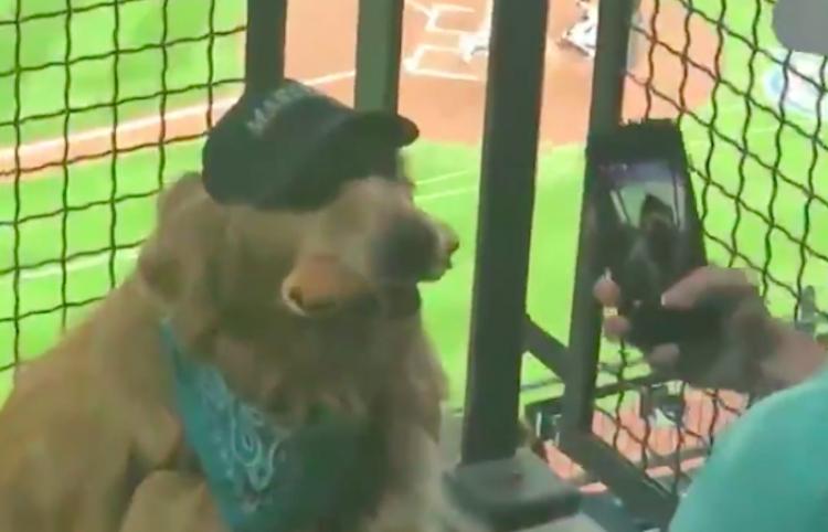 Roba miradas un perrito entusiasmado en un partido de béisbol