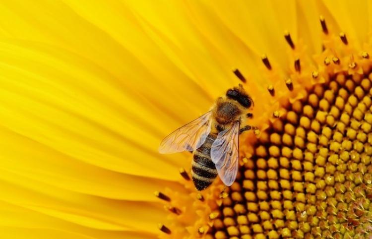 Secretos de las abejas y su sociedad modelo