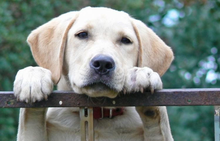 Despiden a un repartidor de Amazon por dejar caer un paquete sobre un cachorro