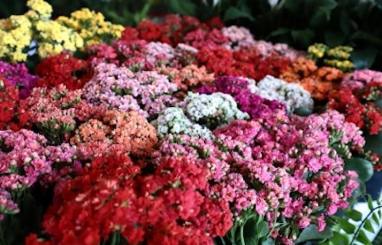 Industria de la flor, con gran potencial para explorar nuevos mercados