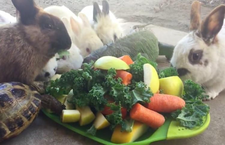 Este video muestra como la comida une a todo tipo de animales