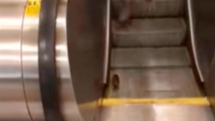 El triste final del 'entrenamiento cardio' de una rata en una escalera de metro de Nueva York