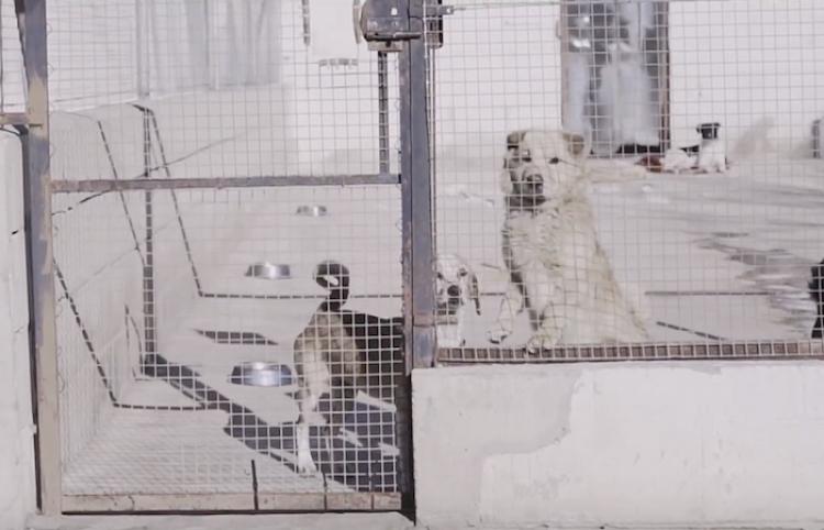 Campaña de concienciación frente al abandono de perros en Semana Santa