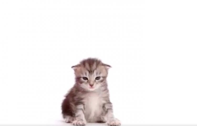 Así es como crece un gatito