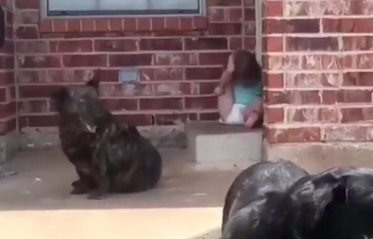 Padres aceptan que su hija pasa demasiado tiempo con los perros