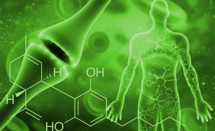 Endocannabinoide podría mejorar comportamiento sexual masculino
