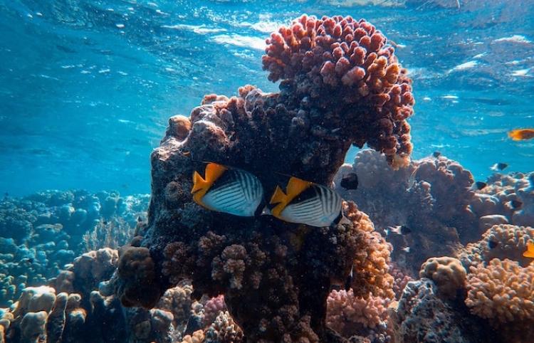 ¿Cómo afecta el cambio climático en los peces?