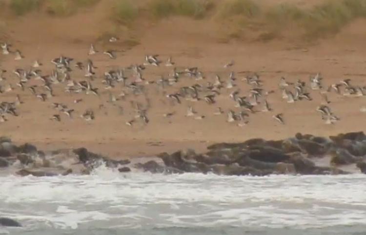 Cientos de focas huyen de la presencia de humanos tomándoles fotos