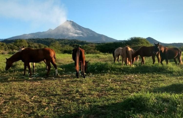 Asociación apuesta por impulsar crianza de caballos como industria