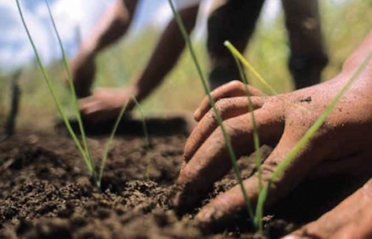 Europa registra un aumento de su producción agrícola
