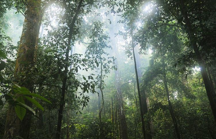 Cámara oculta capta la 'diversidad de la vida' en un simple tronco caído en un bosque francés