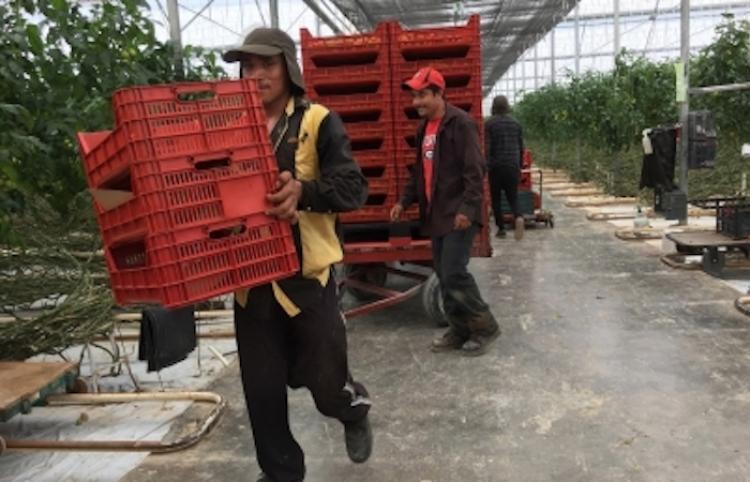 México y Emiratos Árabes van por más comercio agroalimentario