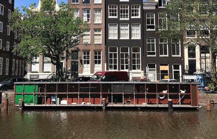El Barco de los Gatos, Poezenboot