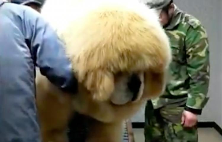 ¿Es este el perro más grande y peludo del universo?