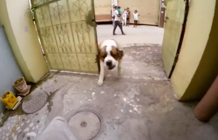 Chico graba su rutina de parkour y se encuentra con un furioso perro