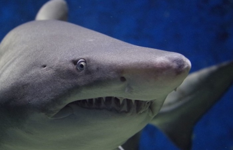Un buceador improvisa un inesperado método de repeler el ataque de un tiburón