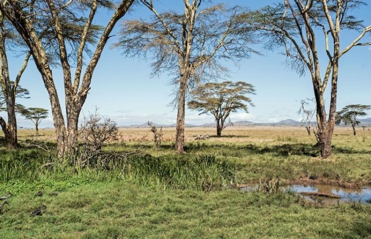 Un nuevo estudio afirma que el Humo de África está fertilizando la selva Amazónica y los Océanos