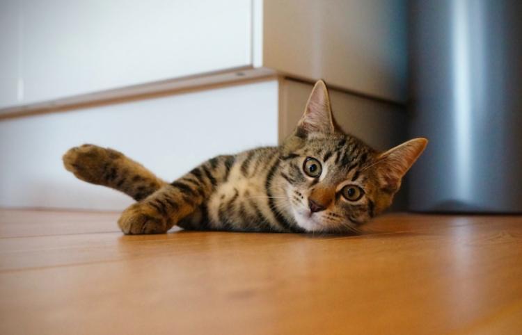 El gato que eligió una cinta de correr para echar una siesta y no piensa rendirse