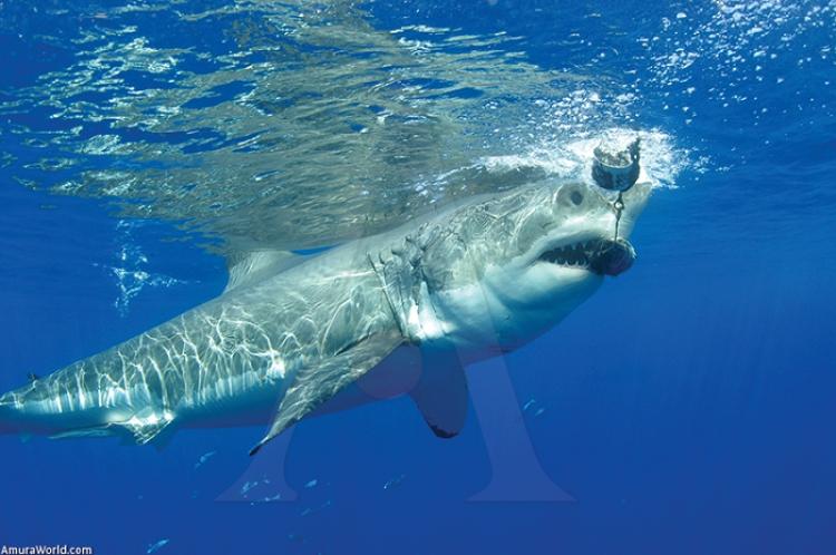 Nadar con tiburones, una experiencia para superar mitos y realidades