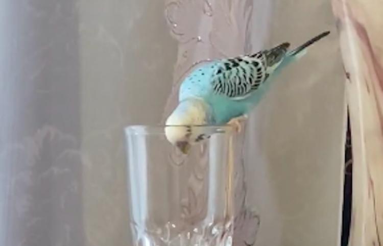 Ave se pone curiosa en un vaso con agua