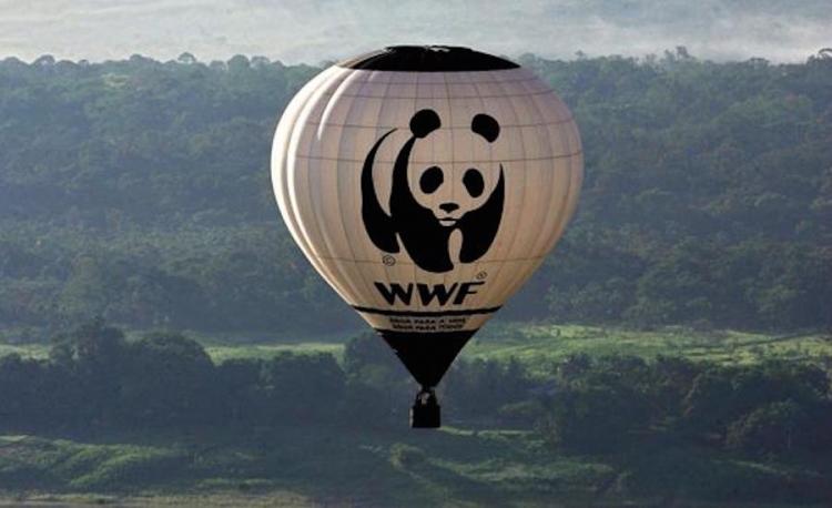 WWF afirma que proyecto de Ley de Bolsonaro no es correcto
